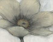 Single Cream Bloom II