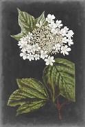 Dramatic White Flowers III