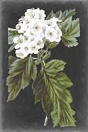 Dramatic White Flowers IV