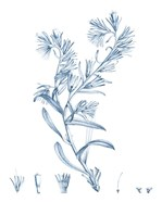 Antique Botanical in Blue II