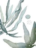 Seaside Seaweed IV