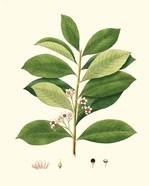 Spring Green Foliage III