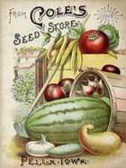 Antique Seed Packets VI