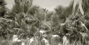 Water Palms Crop