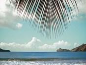 Palm Seashore