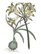 Vintage Floral I on White