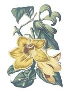 Antique Botanical XVIII Cool