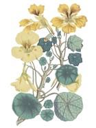 Antique Botanical XVII Cool