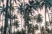 Palms View on Pink Sky I