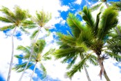 Hawaii Oahu Palms