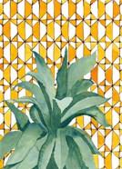 Yellow Tile Agave