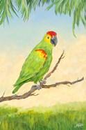 Tropic Bird in Paradise II