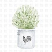 Farm Herbs II