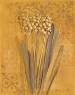 Hyacinth II