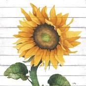 Happy Sunflower II