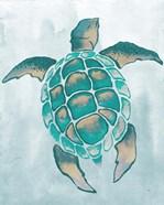Aquatic Turtle II