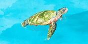 Green Turtle on Light Blue