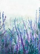 Lavender Garden I