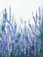 Lavender Garden II