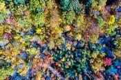Aerial Fall Trees