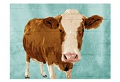 Brown Cow Now