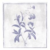 Monochrome Floral Lavender 2