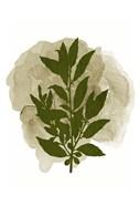 Botanical Branch 1