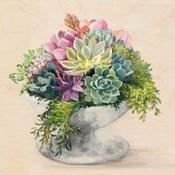 Festive Succulents II