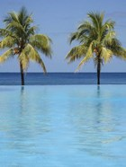 Infinity Pool Surrounded By Palm Trees