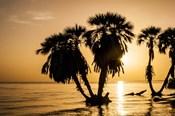Sunrise On The Beach, Through The Palms