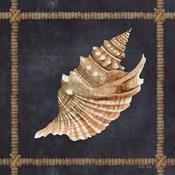 Seashell on Navy V