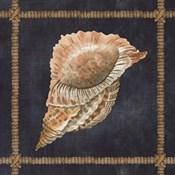 Seashell on Navy VI