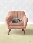 Nap Time Gray Cat