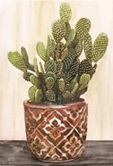 Potted Cactus II