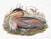 Goulds Coastal Bird II