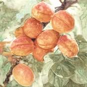 Peach Branch