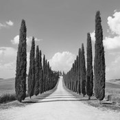 Cypress alley, San Quirico d'Orcia, Tuscany (detail)