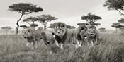 Brothers, Masai Mara, Kenya (detail)