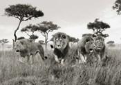 Brothers, Masai Mara, Kenya