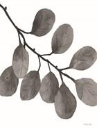 Leaves in Gray I