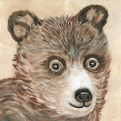 Brody the Bear