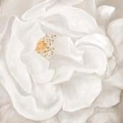 Neutral Rose No. 2