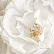 Neutral Rose No. 3