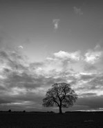 Horizon Tree BW