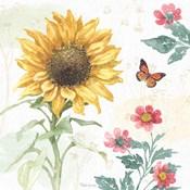 Sunflower Splendor V