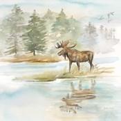 Woodland Reflections II-Moose