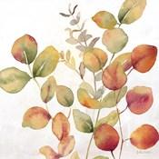 Eucalyptus Leaves Spice I