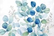 Eucalyptus Leaves landscape blue green