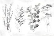 Indigo Botanicals landscape neutral