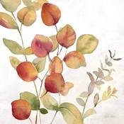 Eucalyptus Leaves Spice II